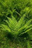 Um fern. fotos de stock royalty free