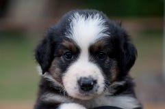 Um filhote de cachorro bonito imagens de stock royalty free