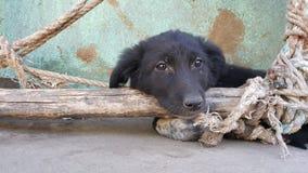 Um filhote de cachorro bonito Fotografia de Stock