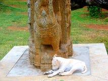 Um filhote de cachorro pacificamente do sono Fotos de Stock Royalty Free