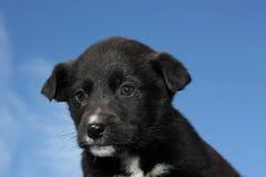 Um filhote de cachorro preto no céu Fotografia de Stock Royalty Free