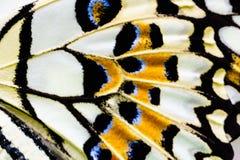 Um fim acima da ideia da textura da asa da borboleta Fotografia de Stock Royalty Free
