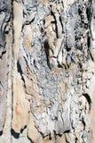Um fim acima da vista de uma árvore velha para fundos e texturas foto de stock