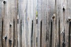 Um fim acima da vista de uma árvore velha para fundos e texturas fotos de stock
