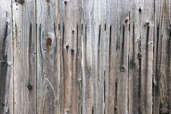 Um fim acima da vista de uma árvore velha para fundos e texturas foto de stock royalty free