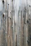 Um fim acima da vista de uma árvore velha para fundos e texturas imagens de stock royalty free