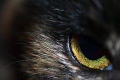 Um fim acima de um olho do ` s do gato Imagem de Stock Royalty Free
