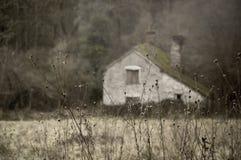 Um fim acima de plantas inoperantes no inverno com uma construção velha arruinada borrada no fundo Com abafado edite Knapp e Pape imagem de stock