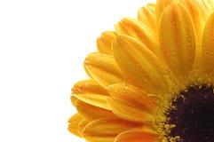 Um fim acima de uma flor amarela imagens de stock