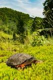 Um fim acima de uma tartaruga de madeira imagem de stock royalty free