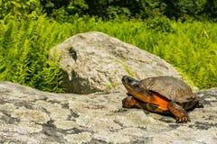 Um fim acima de uma tartaruga de madeira fotos de stock