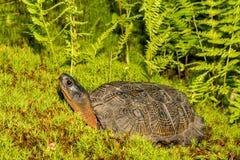 Um fim acima de uma tartaruga de madeira imagens de stock royalty free