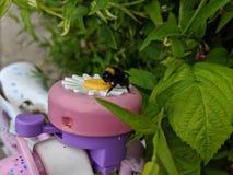 Um fim acima de um zangão que senta-se em um sino da bicicleta da flor da margarida da tomada foto de stock royalty free