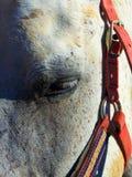 Um fim acima do YE de um cavalo na escola equestre fotografia de stock