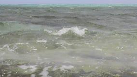 Um fim do caranguejo do Mar Vermelho acima de vídeos de arquivo