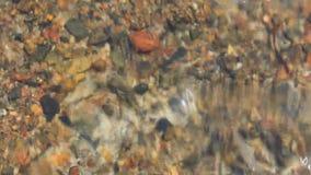 Um fim do caranguejo do Mar Vermelho acima de video estoque