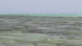 Um fim do caranguejo do Mar Vermelho acima de filme