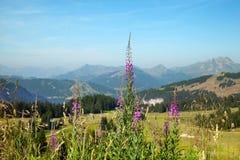 Um firetop nas montanhas Fotos de Stock Royalty Free