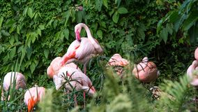 Um flamingo do grupo que descansa no lago entre as árvores em um verão quente do dia imagens de stock