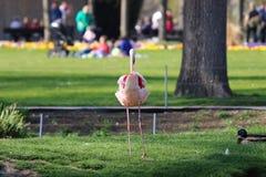 Um flamingo no jardim zoológico em Alemanha foto de stock