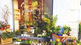 Um florista Foto de Stock Royalty Free