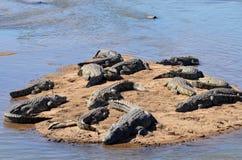 Um flutuador dos crocodilos imagens de stock