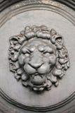 Um focinho de um leão Imagens de Stock