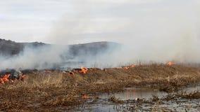 Um fogo de ardência no campo vídeos de arquivo