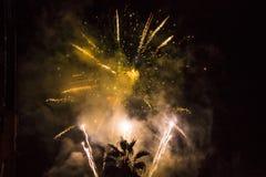Um fogo de artifício amarelo bonito e uma palma no fundo preto fotografia de stock