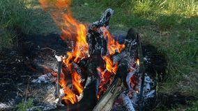 Um fogo de uma pilha dos logs queima-se contra um fundo da grama verde Recreação e turismo na natureza Grandes flamas filme