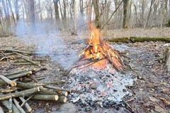 Um fogo em uma floresta na mola imagem de stock royalty free