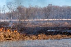 Um fogo forte espalha nos ventanias de vento através da grama seca imagem de stock royalty free