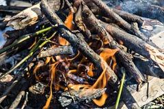 Um fogo na floresta, na madeira ardente e nos ramos Foto de Stock Royalty Free