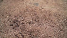 Um formigueiro com as formigas que entram e que saem de sua casa Entrada ao formigueiro com a chegada e a partida das formigas video estoque