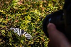 Um fotógrafo e uma borboleta foto de stock royalty free