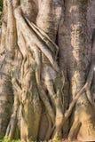 Um fragmento de um tronco de árvore Fotografia de Stock