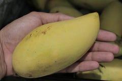 Um fruto amarelo Ásia da manga disponível Fotografia de Stock Royalty Free