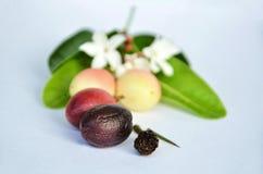 Um fruto Carissa Carandas com cores diferentes imagens de stock royalty free