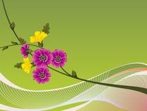 Um fundo do projeto floral Fotografia de Stock