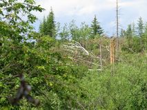 Um furacão poderoso com a raiz retirou árvores e arbustos Foto de Stock Royalty Free