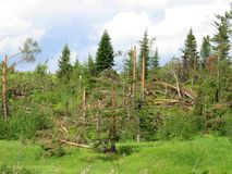 Um furacão poderoso com a raiz retirou árvores e arbustos Imagem de Stock