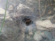 Um furo da coberta da Web de aranha na parede de pedra Fotografia de Stock
