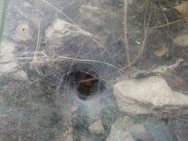 Um furo da coberta da Web de aranha na parede de pedra Imagem de Stock Royalty Free