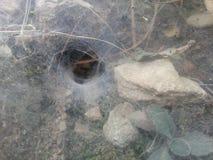 Um furo da coberta da Web de aranha na parede de pedra Imagem de Stock