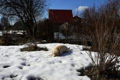 Um galho na primavera Foto de Stock