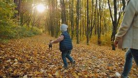 Um garotinho com um cachorro numa coleira no parque de outono, vista de trás video estoque