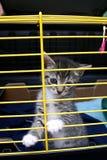 Um gatinho. Fotografia de Stock