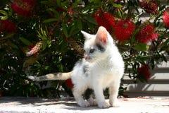 Um gatinho bonito fotos de stock