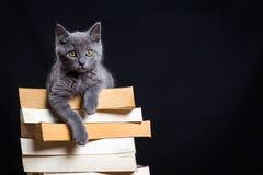 Um gatinho cinzento com os olhos amarelos que encontram-se em uma pilha dos livros fotografia de stock royalty free