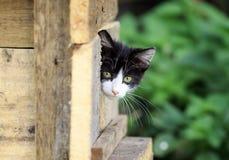 Um gatinho desabrigado assustado pequeno olha fora de esconder no stree Imagem de Stock